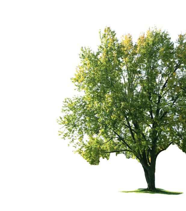 Apple Yard Tree Care